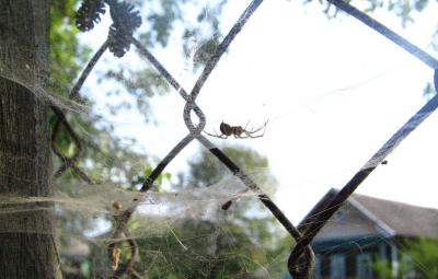 Как избавиться от пауков на даче: в частном доме и на огороде