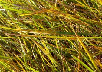 Признаки острого дефицита полезных веществ в почве