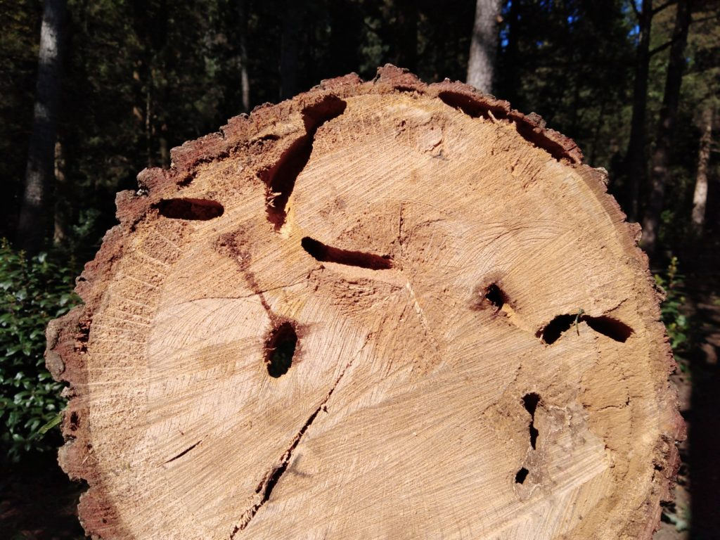 Отверстия, уходящие вглубь породы и имеющие диаметр до 3 см.
